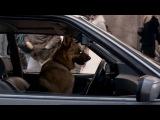 Великолепный пес ( 2010 )